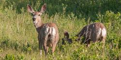 agriculture-wildlife.jpg