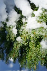 melting_snow.jpg