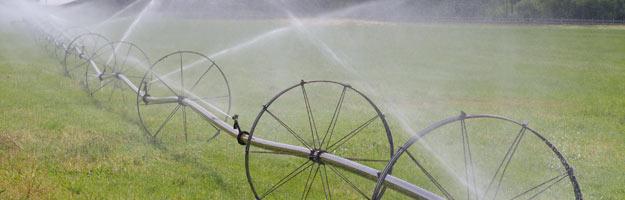 irrigation_forage.jpg