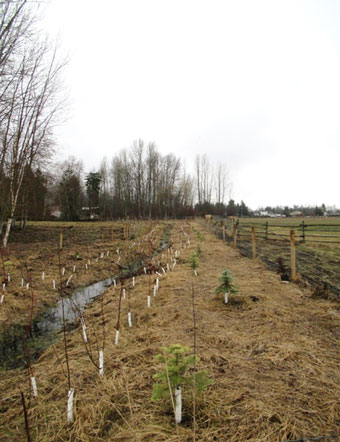 swc_alderson_fence_plants_340px.jpg