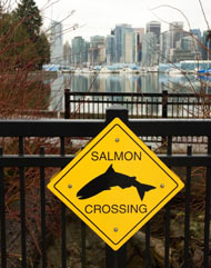 salmon_crossing.jpg